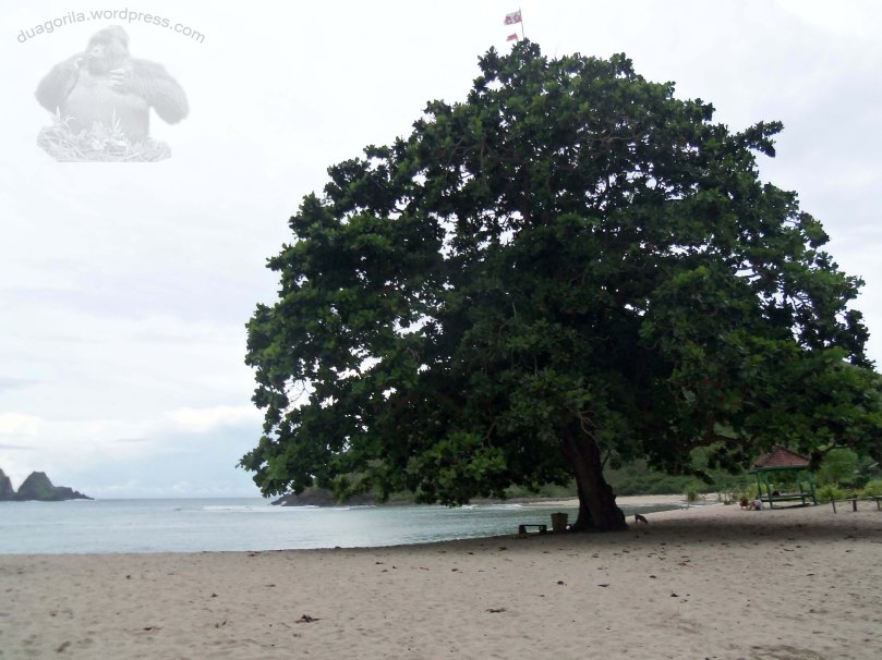pohon yang jadi ciri khas mawun